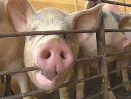 Maryland General Assembly Approved $16 Million in New Pork Spending for Local Projects